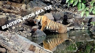 Ranthambore Tiger Sighting | T39 Noor in Water