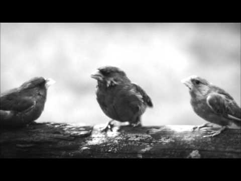 Beatbox Bird - Unexpected Tweet - Beatboxing Bird Official Advert