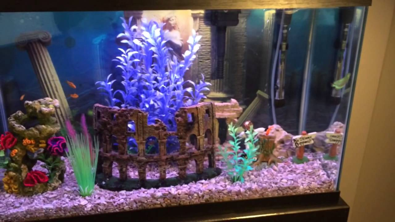 Fresh water 30 gallon fish tank youtube for 30 gallon fish tank