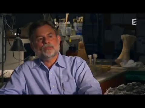 Le Megalodon ancêtre du Requin Blanc DOCUMENTAIRE