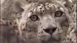 Документальный Фильм про Сибирь