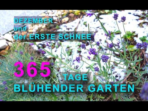 365 Tage blühender Garten: DER ERSTE SCHNEE | kleiner Garten im Dezember