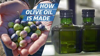How Olive Oil Is Farmed and Processed at the Country's Biggest Producer —How to Make It