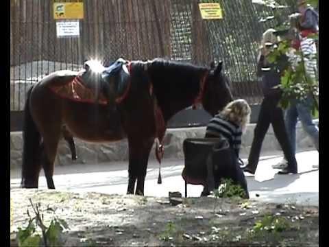 Секс в открытом видео с кони