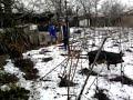 faza tare  la taiat porcu , a fugit porcu la vecini in gradina )))))