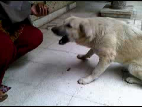 Deepa Feeding Dog.3gp video