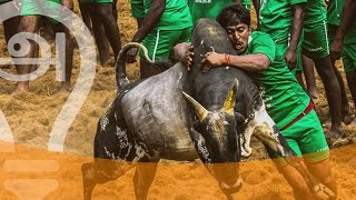 10 FACTS ABOUT JALLIKATTU