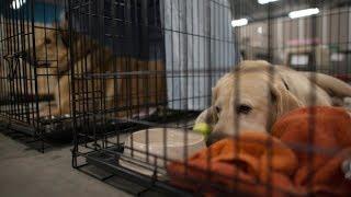 Канада 1212: О бездомных животных и приютах для них