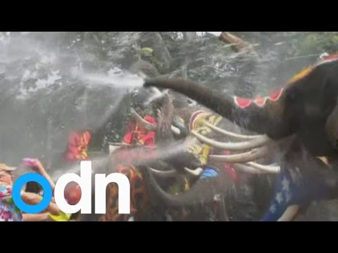 Songkran: Elephants soak tourists with water ahead of the Thai new year