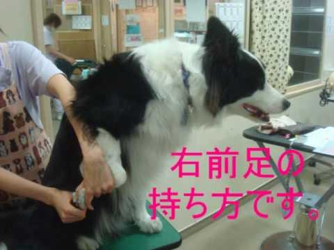 ノア動物病院トリマーが犬猫の簡単爪切り法を教えちゃいます♪