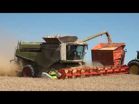 CLAAS Lexion 780 : THE MONSTER