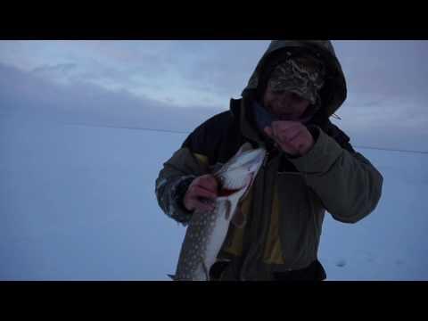 рыбалка на рыбинском водохранилище ловля щуки на жерлицы