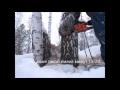 Березовый сувель, добыча и сушка