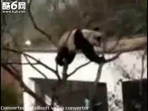 The Real Kong Fu Panda