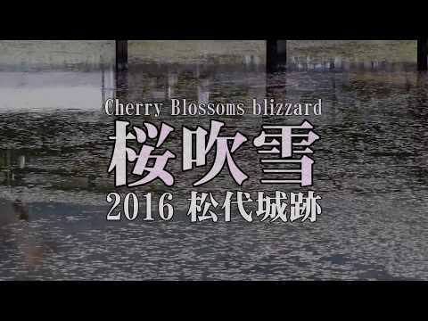 Cherry blossoms Blizzard HD Japan 城跡の桜吹雪 2016 松代城(海津城)長野県