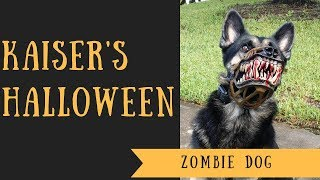 German Shepherd Zombie Kaiser on Halloween.. Fail