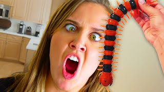 GIANT Centipede! What should we do? Funny video LOL