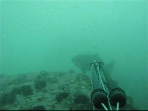 Pesca Submarina al 100% en Peru -1 / Spearfishing