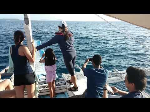 Dolphin Watching in Panglao, Bohol