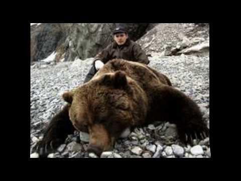Жесть медведь жертвы.  Осторожность при общении с природой. Tin bear victim.