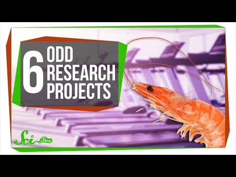 Shrimp Treadmills and 5 Other Odd Research Projects