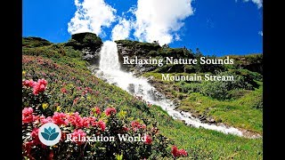 [Nature Sounds Relaxation] Bird Singing , Mountain stream ,Mediation