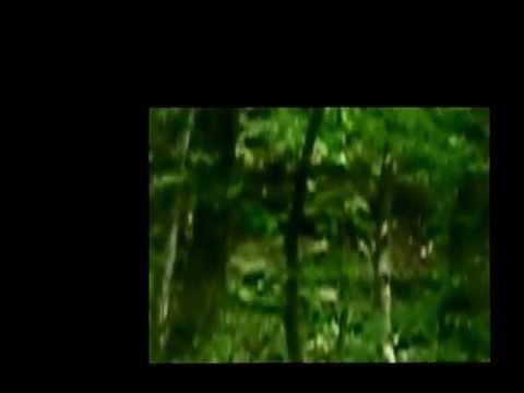 Машук, лес, русский черный терьер