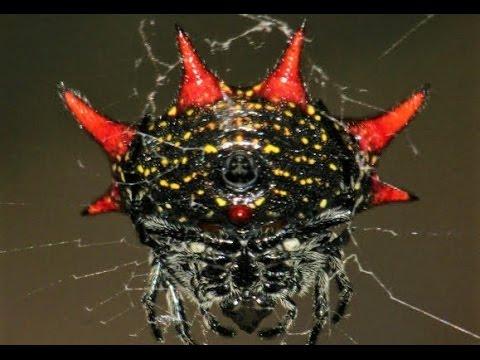 World's 21 Weirdest Spiders