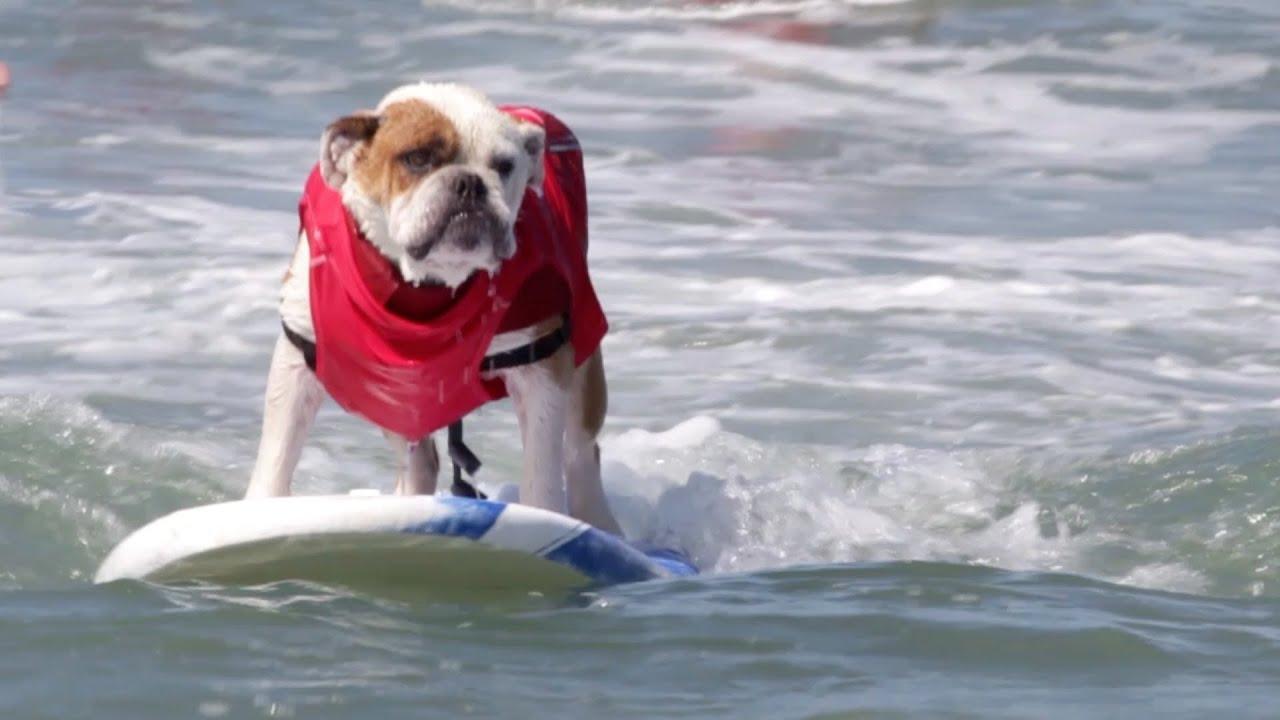 Dog Show In California