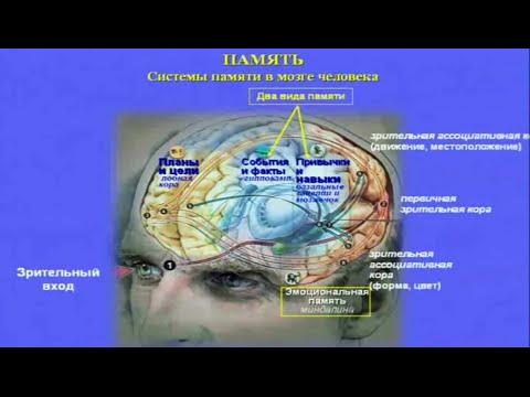 Курс лекций 1 эволюция психики