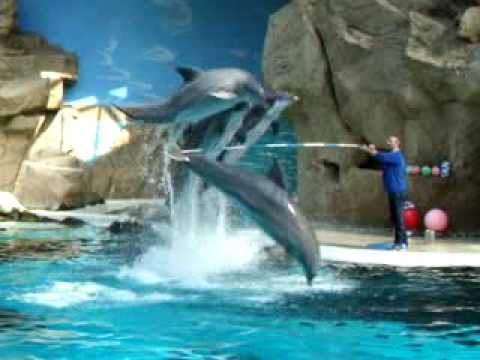 dolphins-ar-jumping-out-of-the-water.html