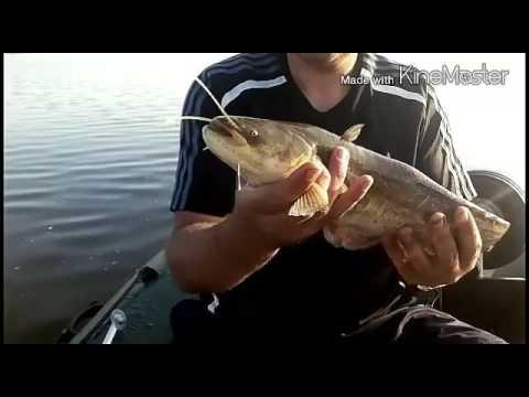 эхолот рыбалка на сома на квок видео