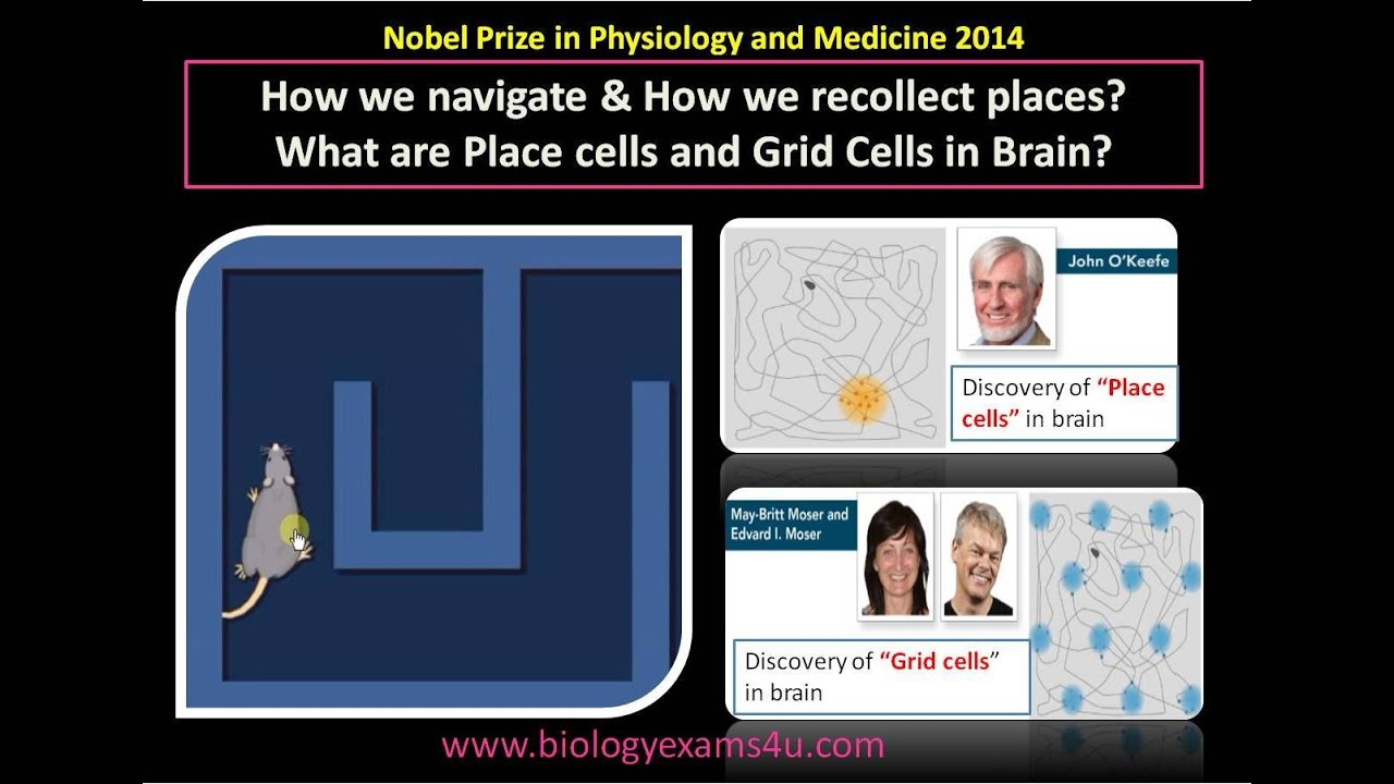 What are Place cells and Grid Cells in Brain? Nobel Prize