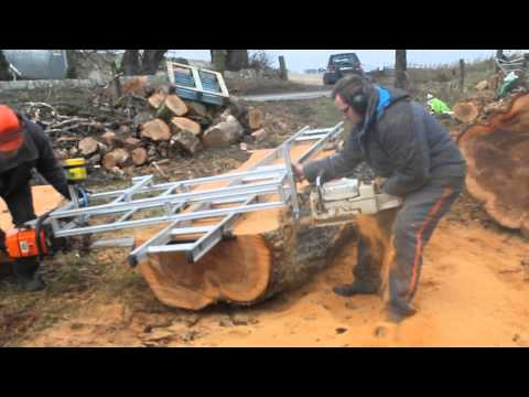 milling elm tree