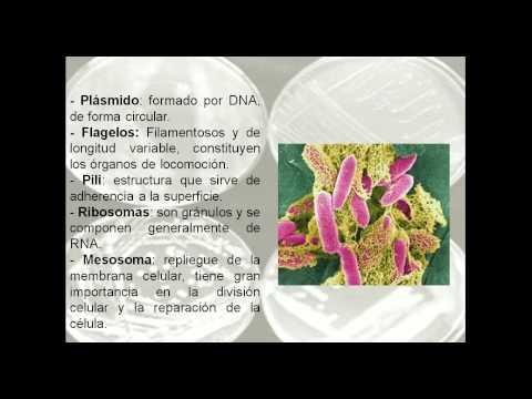 Clasificación de Microorganismos Básico
