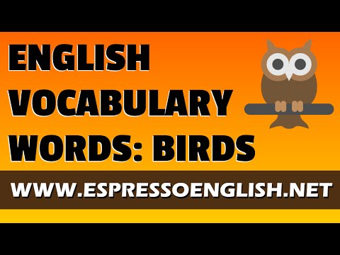 Learn English Vocabulary Words for Birds