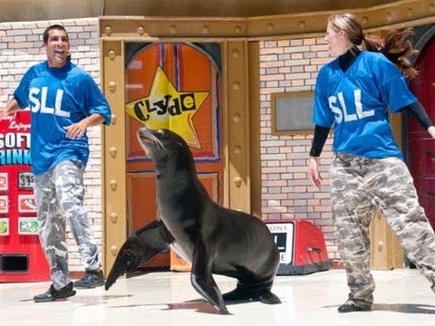�� 2013 Sea Lions LIVE Comedy at SeaWorld San Diego