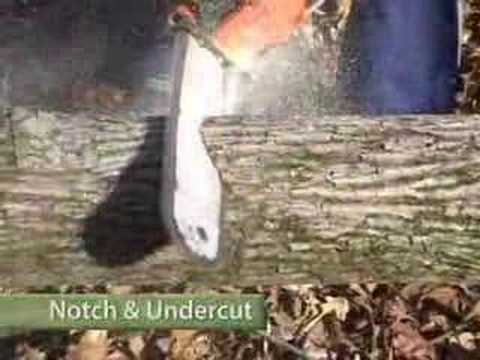 Cut A Tree Down Safely Part 2. Bucking & Cutting video