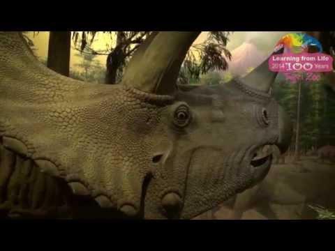 台綜-圓仔日記-EP 329 恐龍探索館重新開放-互動遊戲及快閃加碼