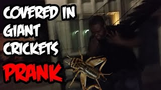 Covered In Giant Live Crickets PRANK Goes Wrong!!!
