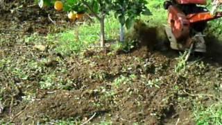 Motocultor (5), Labrando Alcorques árboles frutales
