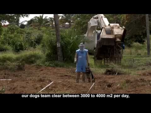 Mozambique: Answering the Mine Ban Treaty
