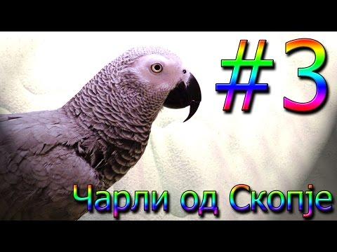 Чарли од Скопје / Charli od Skopje #3 [Charlie: African Grey Talking Parrot]