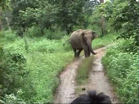 Hurulu Eco Park Sri Lanka - Elephant safari