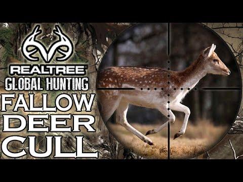 Fallow Deer Stalking & Cull