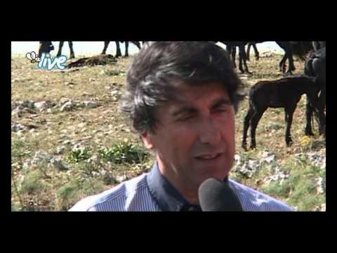 """""""La Murgia corre veloce in groppa la suo cavallo nero"""""""