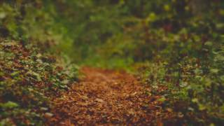 Rain on Leaves on a Forest Road in Autumn - 10 Hours Video with Sounds for Relaxation and Sleep