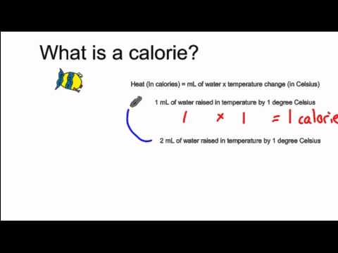 FishiVersity - What is a Calorie?