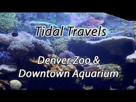 Tidal Travels: MACNA 2014 Denver Zoo and Downtown Aquarium