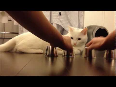 Smart Cat - Smart Cat - Kido's First Shell Game